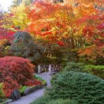Five Ways to Warm Up In Victoria This Fall!